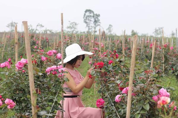Hiên tìm thấy tình yêu cuộc sống khi có cơ hội tiếp xúc với các loại hoa hồng.