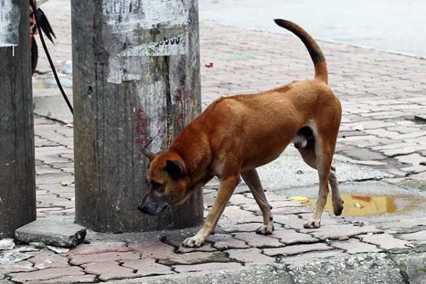 Không thả rông chó ra đường mà không có chủ dẫn bằng dây xích và rọ mõm.